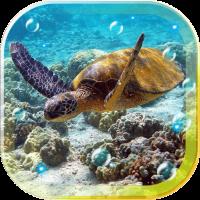 Tortoises Sea