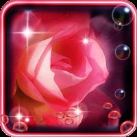Roses Dew Drops