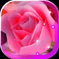 Roses Red n Pink