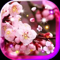 Sakura Amazing