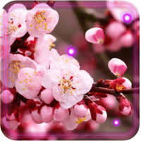 Sakura Blossoms HD