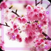 Sakura Music