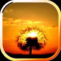 Dandelion Sunset LWP
