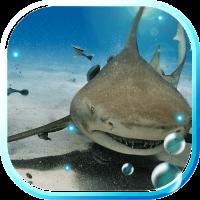 Sharks HD live wallpaper