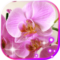 Orchid Music live wallpaper
