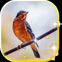 Birds Amazing LWP