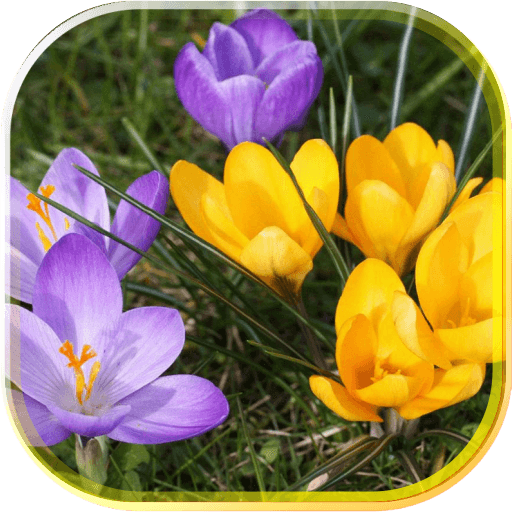 Crocuses Music LWP