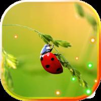 Ladybird Beetle HD LWP