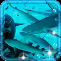 Sharks CoralReef