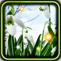 Snowdrop Spring live wallpaper