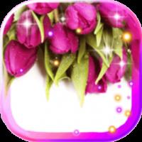 Tulips Dew Drops LWP