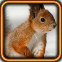 Squirrel Forest