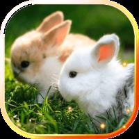 Bunnies live wallpaper