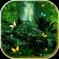 Jungles Night