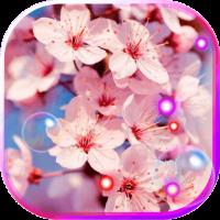 Sakura HD Live Wallpaper