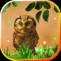 Owl Small Pretty LWP