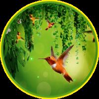 Hummingbirds Sounds LWP