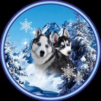 Husky Best Dogs