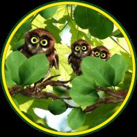 Owls Funny LWP