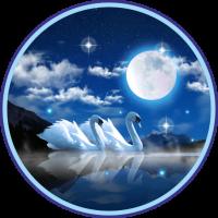 Swans Night