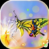Butterfly HD 2017