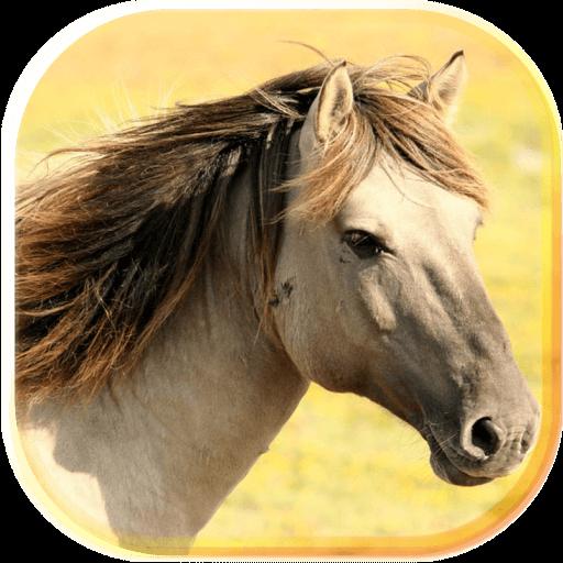 Horses Sounds 2017 LWP