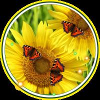 Butterflies n Sunflowers LWP