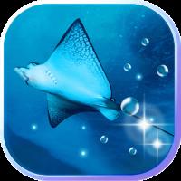 Sea Skate fish n Sharks