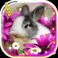 Bunnies Cute live wallpaper