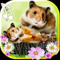 Hamster Cute live wallpaper