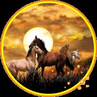 Horses Wild Sunset Live Wallpaper