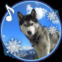 Husky Winter live wallpaper
