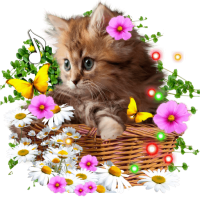 Kitty Small Sounds live wallpaper
