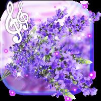 Lavender Purple live wallpaper