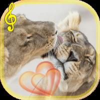 Lion Love live wallpaper