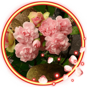 Roses Bouquet Live Wallpaper