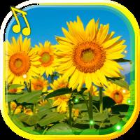 Sunflowers live wallpaper