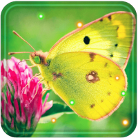 Butterfly Best live wallpaper