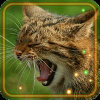 Cat Sounds Live wallpaper