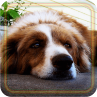 Dogs Gallery live wallpaper