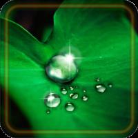Drops Dew live wallpaper