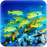 Fish Coral Reef live wallpaper