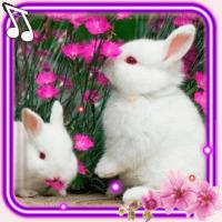 Funny Bunnies live wallpaper