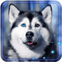Husky Dogs Free live wallpaper