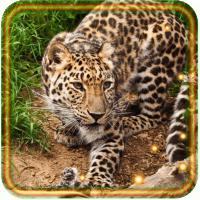 Jungles Predators live wallpaper