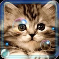 Kittens Lovely live wallpaper