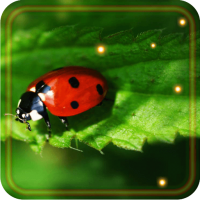 Ladybugs Nice live wallpaper