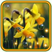 Narcissus 2018 live wallpaper
