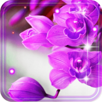 Orchid Free 2018 live wallpaper