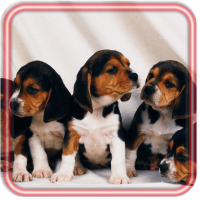 Puppy Pet Free Live wallpaper